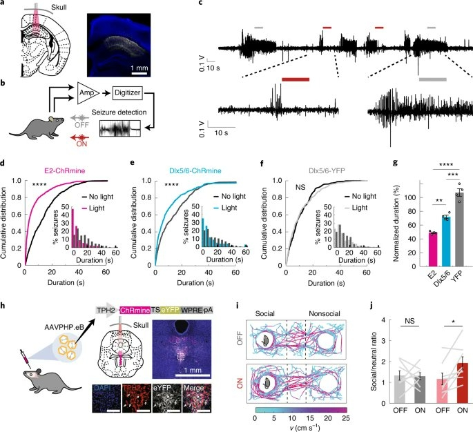 Deep brain optogenetics without intracranial surgery - Deisseroth lab.jpg